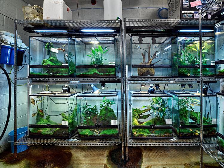Amphibian_Ark.jpg
