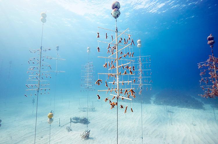 Coral_Restoration_Foundation.jpg